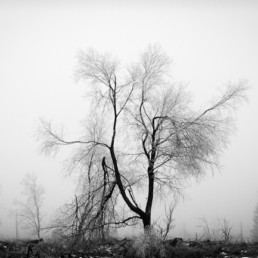 Alexandra Wünsch Alex Einblick Natur Wettbewerb GDT Naturfotografie fotoforum award hohes Venn bäume