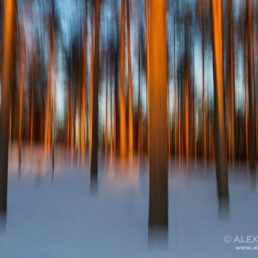 Alexandra Wünsch Alex Einblick Natur Wettbewerb GDT Naturfotografie fotoforum award Bäume schnee winter
