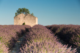 Alex Wünsch Alexandra Wünsch Einblick-Natur Fotografie Naturfotografie Sommer Lavendel Feld Frankreich Provence