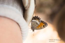Alex Wünsch Alexandra Wünsch Einblick-Natur Fotografie Naturfotografie Sommer Frankreich Provence Hipparchia semele Ockerbindiger Samtfalter