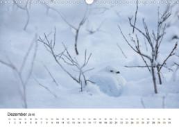 Fotokalender Finnland Naturfotografie Alexandra Wünsch Einblick Natur tierische Entdeckunsgreise Tiere Lappland Nordkarelien Schneehuhn