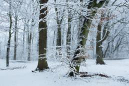 Alex Wünsch Aue Alexandra Wünsch Einblick-Natur Fotografie Naturfotografie Schnee Winter Düsseldorf Garath Urdenbacher Kämpe