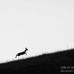 Alexandra Wünsch Alex Einblick Natur Wettbewerb GDT Naturfotograf des Jahres Sprung Reh