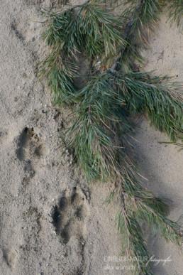 Alex Wünsch Alexandra Wünsch Einblick-Natur Fotografie Naturfotografie Spur Fährte Trittsiegel Wolf Grauwolf canus lupus