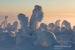 Alex Wünsch Alexandra Wünsch Einblick-Natur Fotografie Naturfotografie Winter Finnland Kuusamo Schnee Bäume Packschnee tykky