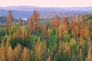 Alex Wünsch Naturfotografie Nordkarelien Finnland Bäume