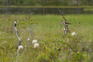Alex Wünsch Naturfotografie Nordkarelien Finnland Moor