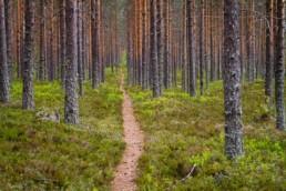 Alex Wünsch Naturfotografie Nordkarelien Finnland Weg Wald