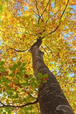 Alex Wünsch Naturfotografie Slowenien Herbst