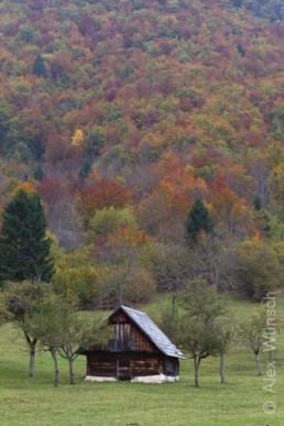 Alex Wünsch Naturfotografie Slowenien Herbst Alm