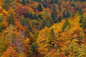 Alex Wünsch Naturfotografie Slowenien Herbst Bäume