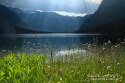 Alex Wünsch Naturfotografie Slowenien See Sommerblumen