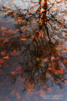 Alexandra Wünsch Alex Einblick Natur Wettbewerb GDT Naturfotografie asferico 2012 spiegelung Baum