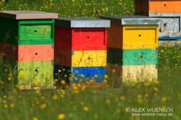Alex Wünsch Naturfotografie Slowenien