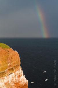 Alex Wünsch Naturfotografie Helgoland Vogelfelsen Regenbogen