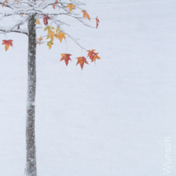 Alexandra Wünsch Alex Einblick Natur Wettbewerb GDT Naturfotografie europäischer Naturfotograf 2013 enj amberbaum