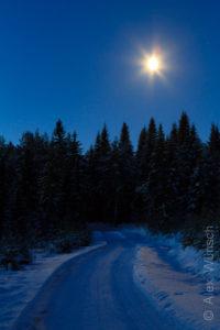 Alex Wünsch Naturfotografie Finnland Winter Schnee Vollmond