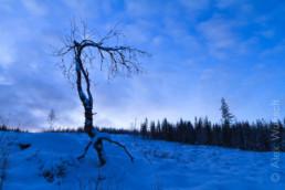 Alex Wünsch Naturfotografie Finnland Winter Schnee Bäume