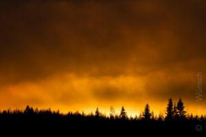 Alex Wünsch Naturfotografie Finnland Winter