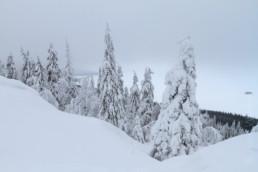 Alex Wünsch Naturfotografie Finnland Winter Schnee Bäume Koli