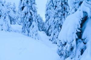 Alex Wünsch Naturfotografie Finnland Winter Koli SchneehaseSpur