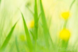 Alexandra Wünsch Alex Einblick Natur Wettbewerb GDT Naturfotografie fotoforum award frühling butterblumen