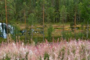 Alex Wünsch Naturfotografie Nordkarelien Finnland