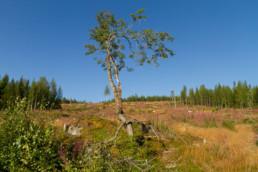 Alex Wünsch Naturfotografie Finnland Nordkarelien