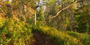 Alex Wünsch Naturfotografie Koli Finnland Nordkarelien