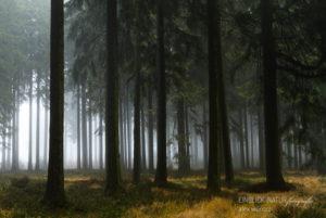 Alexandra Wünsch Alex Einblick Natur Naturfotografie GDT Wald Nadelwald Belgien Hohes Venn Nebel