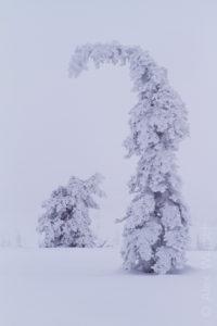 Alex Wünsch Naturfotografie Finnland Winter Schnee Bäume Riisitunturi