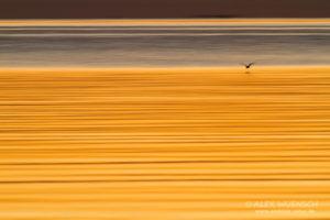 Alexandra Wünsch Alex Einblick Natur Wettbewerb GDT Naturfotografie fotoforum Award Seeschwalbe Ostsee Finnland