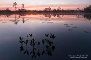 Alexandra Wünsch Alex Einblick Natur Wettbewerb GDT Naturfotografie fotoforum award Moor Sumpf Finnland