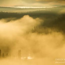 Alexandra Wünsch Alex Einblick Natur Naturfotografie GDT Morgen Nebel Wald Fluß