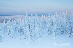 Alex Wünsch Naturfotografie Winter Finnland Schnee
