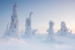 Alex Wünsch Naturfotografie Winter Finnland Schnee Riisitunturi