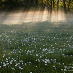 Alexandra Wünsch Alex Einblick Natur Naturfotografie GDT Morgen Nebel Wiese