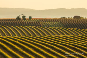 Alexandra Wünsch Alex Einblick Natur Naturfotografie GDT Lavendel Ernte Frankreich Provence