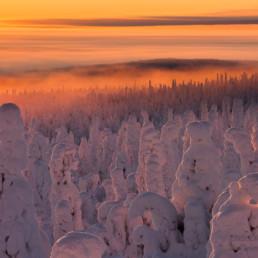 Alex Wünsch Alexandra Wünsch Einblick-Natur Fotografie Naturfotografie Winter Finnland Kuusamo tykky Packschnee Bäume
