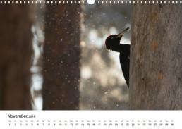 Fotokalender Finnland Naturfotografie Alexandra Wünsch Einblick Natur tierische Entdeckunsgreise Tiere Lappland Nordkarelien Schwarzspecht
