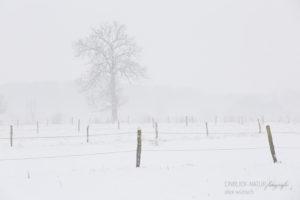 Alex Wünsch Alexandra Wünsch Einblick-Natur Fotografie Naturfotografie Schnee Winter Düsseldorf Garath Urdenbacher Kämpe Aue