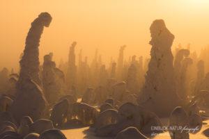 Alex Wünsch Alexandra Wünsch Einblick-Natur Fotografie Naturfotografie Winter Finnland Kuusamo Schnee Bäume Packschnee Sonnenuntergang Gegenlicht tykky