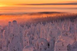 Alex Wünsch Alexandra Wünsch Einblick-Natur Fotografie Naturfotografie Winter Finnland Kuusamo Schnee Bäume Packschnee tykky Kuntivaara