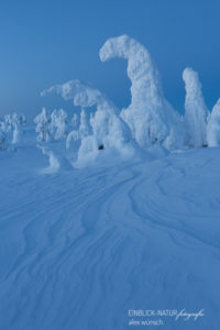 Alex Wünsch Alexandra Wünsch Einblick-Natur Fotografie Naturfotografie Winter Finnland Kuusamo Schnee Bäume Packschnee tykky Riisitunturi