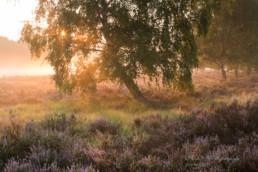 Alex Wünsch Alexandra Wünsch Einblick-Natur Fotografie Naturfotografie Sommer Heide Blüte Wahner Heide Troisdorf