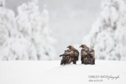 Alex Wünsch Alexandra Wünsch Einblick-Natur Fotografie Naturfotografie