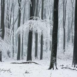 Alex Wünsch Alexandra Wünsch Einblick-Natur Fotografie Naturfotografie Winter Solinger Heide Krüdersheide Schnee NRW Düsseldorf