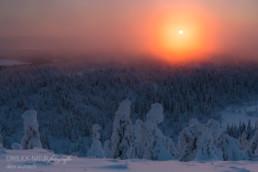 Alex Wünsch Alexandra Wünsch Einblick-Natur Fotografie Naturfotografie Winter Finnland Schnee Kaamos Nebel