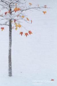 Alex Wünsch Alexandra Wünsch Einblick-Natur Fotografie Naturfotografie Deutschland Winter Schnee Amber Baum