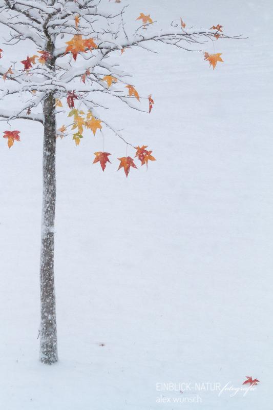 Alexandra Wünsch Einblick Natur Wettbewerb Naturfotografie Glanzlichter ENJ 2019 2013 Amber Schnee Düsseldorf